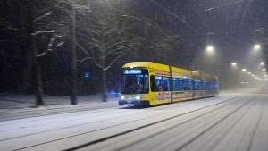 Легкорельсовый трамвай в Сертолово