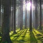 Строить на землях лесного фонда запретят
